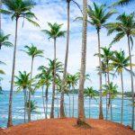Person standing on next to coconut trees, Mirissa, DMC Sri Lanka