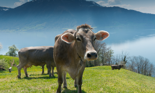 Ideas for sustainable events in Switzerland